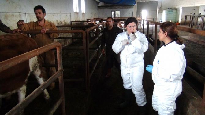 Kadın Veterinerler Köylerde Aşı ve Küpeleme Yapıyor 14