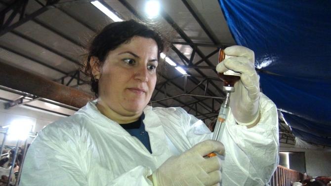 Kadın Veterinerler Köylerde Aşı ve Küpeleme Yapıyor 15