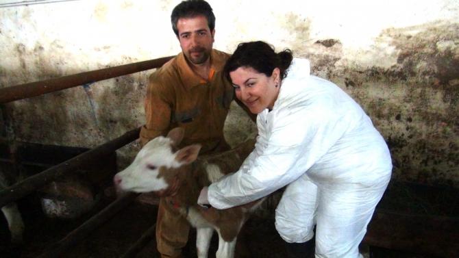 Kadın Veterinerler Köylerde Aşı ve Küpeleme Yapıyor 3