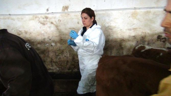Kadın Veterinerler Köylerde Aşı ve Küpeleme Yapıyor 4