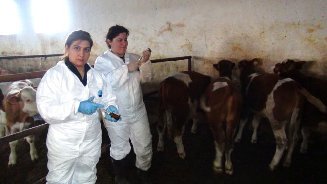Kadın Veterinerler Köylerde Aşı ve Küpeleme Yapıyor 7