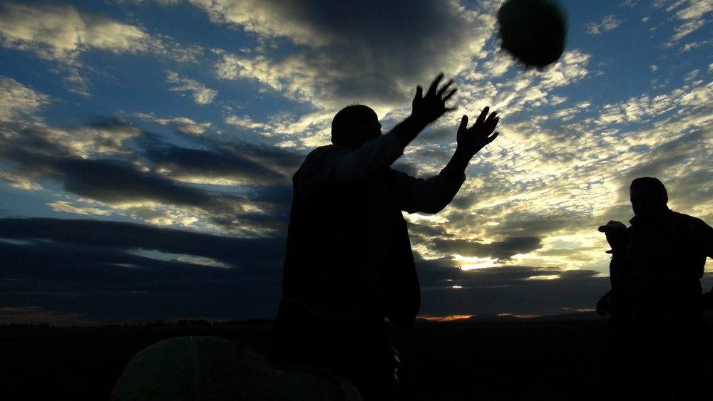 Kars'ta Bostancıların Mahsül Sökümleri Başladı 6