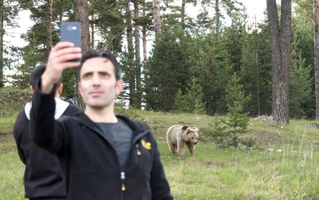 'Boz Ayı'larla Selfie Çektiler 10