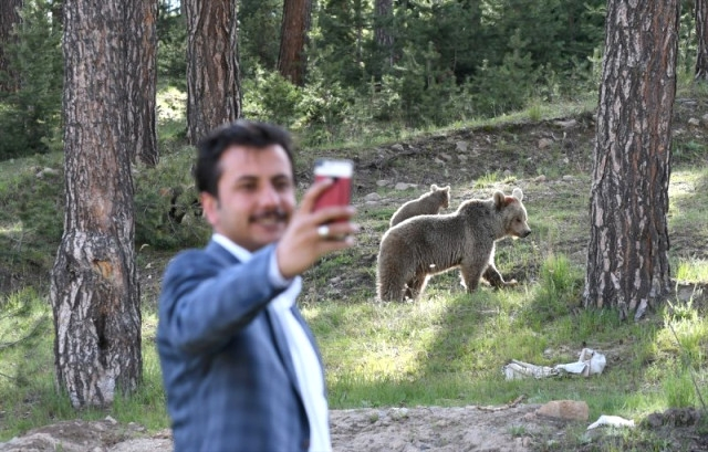 'Boz Ayı'larla Selfie Çektiler 11