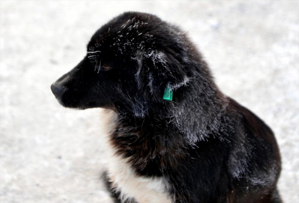 Kars'ta Kış 39