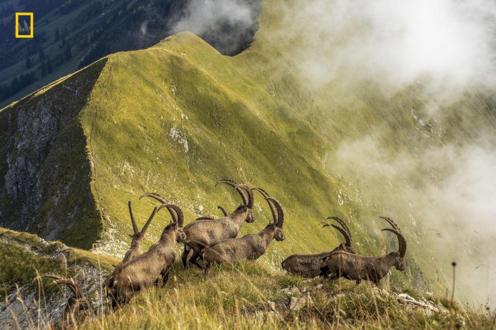National Geographic Seyahat Fotoğrafı Yarışması 9