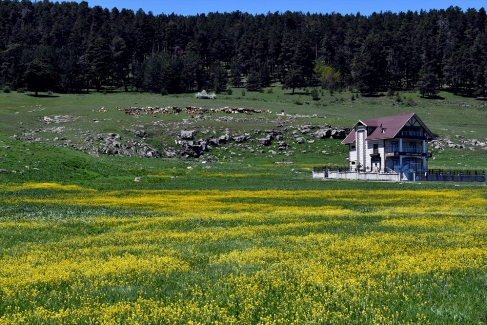 Kars'ta 'Bahar' Başka Güzel 22