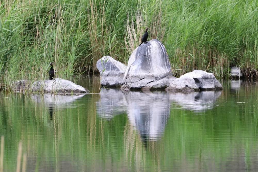 Ağrı Dağı Milli Parkı ve Yaban Hayatı 19