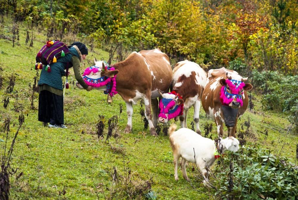 Karadeniz'de Yaylacıların, Renkli Yolculuğu 5