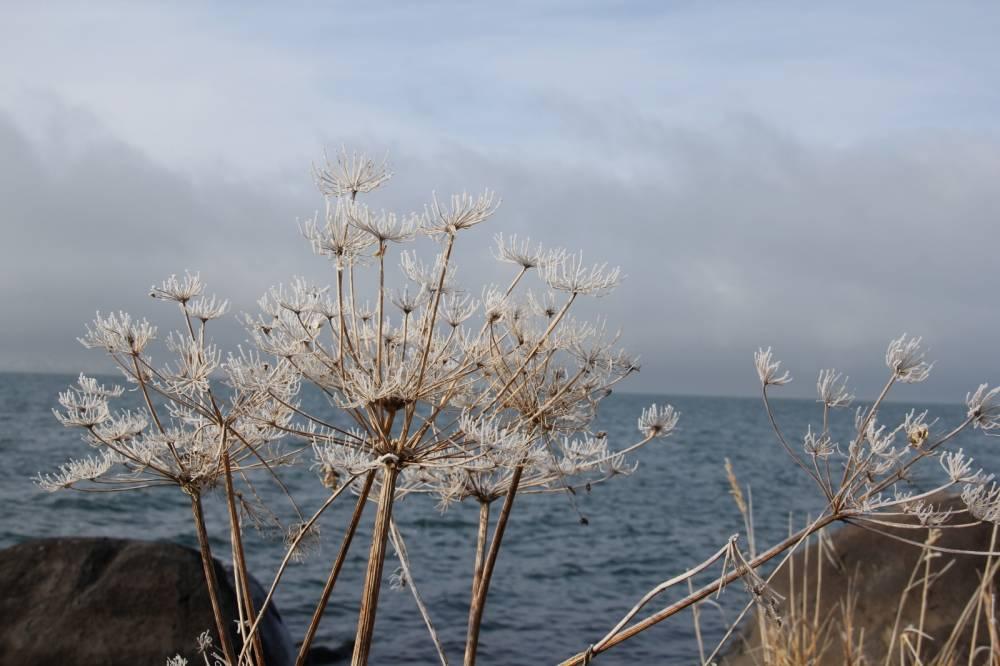 Çıldır Gölü'nde Sessizlik! 10