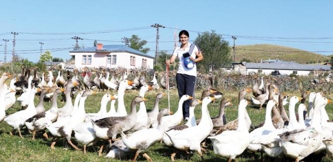 Dünya Şampiyonu Kaz Çobanı 6