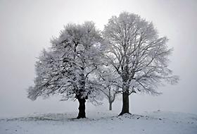 Kar Yağışı Bölge Yaşamını Felç ETTİ