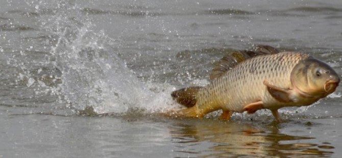 'Baraj Gölü'nde Balık Ölümleri