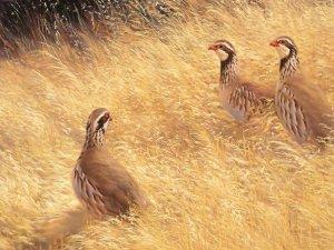 'Keklik Avcıları'na Suçüstü