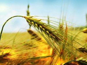 Kars'ta 27 Bin 516 Çiftçiye Mazot, Gübre Ve Toprak Analizi Desteği