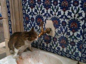 Sıcaktan Bunalan Kedi Çeşmeden Böyle Su İçti