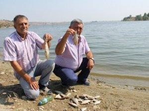 Boğazköy Barajında Toplu Balık Ölümleri