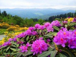 Doğu Karadeniz'in Bitki Envanteri Çıkarılıyor