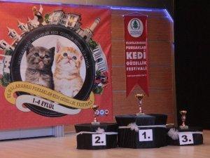 En Güzel Kediler Yarıştı