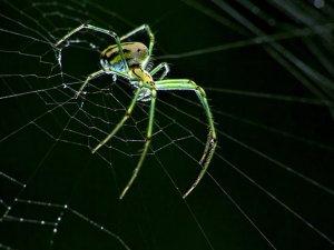 Kulağından Canlı Örümcek Çıktı