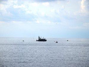 Denizde Palamut Bolluğu Yaşanıyor