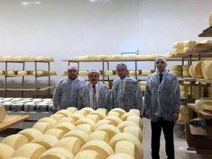 Peynir Fabrikasında İncelemeler