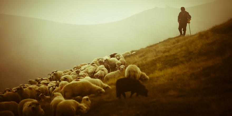 Hayvanları Sınırı Geçen Çobana Dayak!