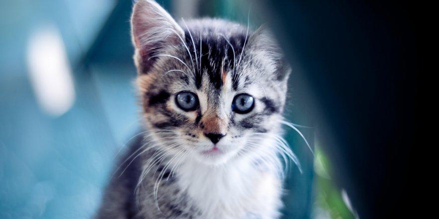 Araçta Sıkışan Kedi Kurtarıldı