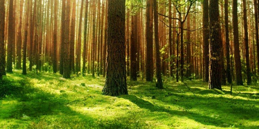 Odun Toplamaya Giden Kişi Ormanda Ölü Bulundu