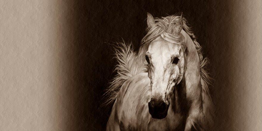 Sarıkamış'ta Bataklığa Düşen At Kurtarıldı