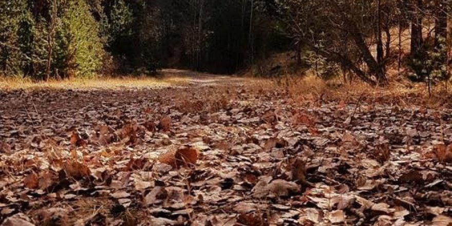 Sarıkamış'ta Sonbahar