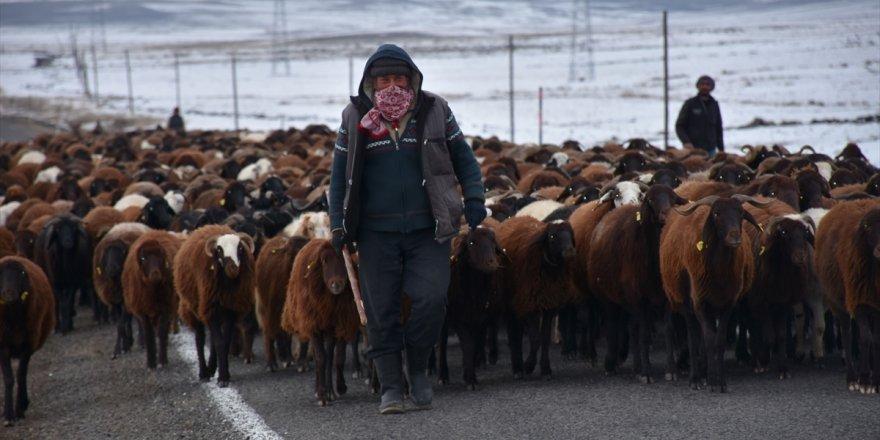 Iğdırlı Çobanların 'Zorlu' Yolculuğu