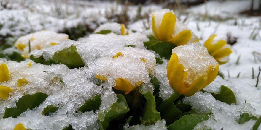 'Mayıs Ayı'nda Kar Yağışı