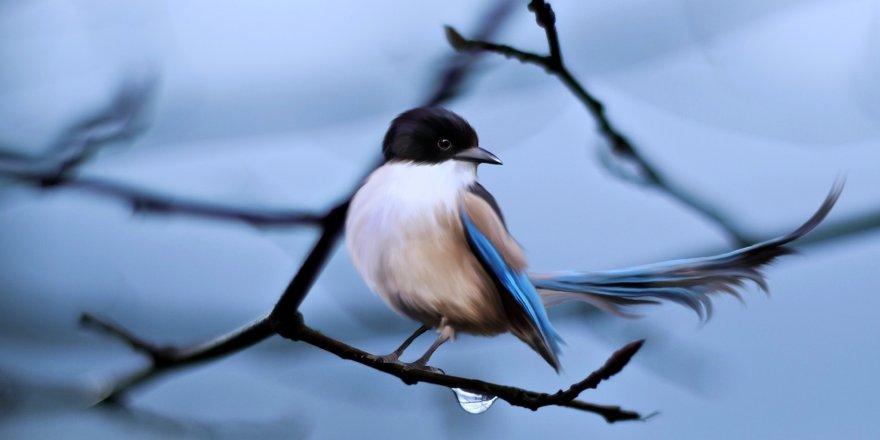 'Kuş Cenneti'nde 105 bin Kuş Halkalandı