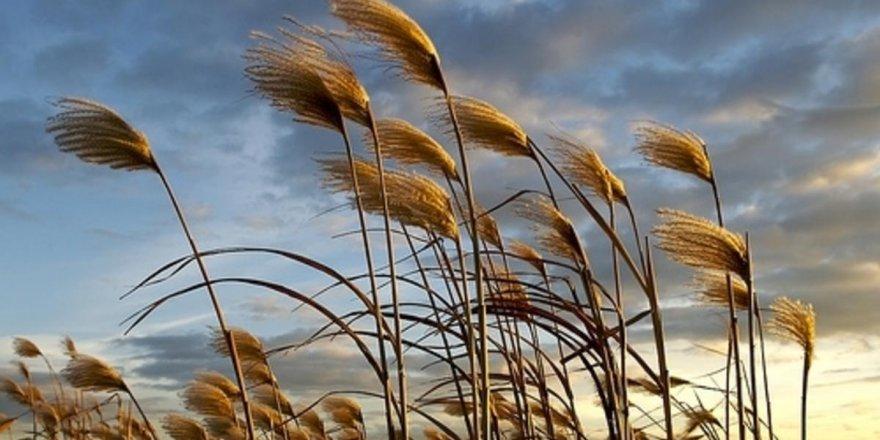 Erzincan ve Erzurum'da Kuvvetli Rüzgar Uyarısı