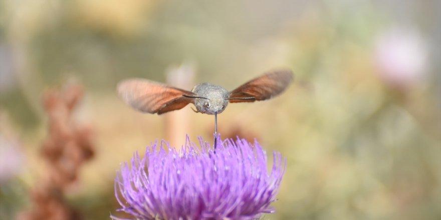 Yaylalar Çiçek ve Böceklerle Renklendi
