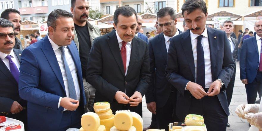 Türkiye'nin Yöresel Peynirleri Kars'ta
