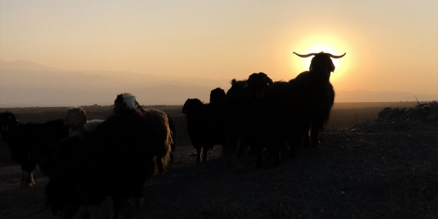 Arpaçay'da 'Koyun' Gerginliği