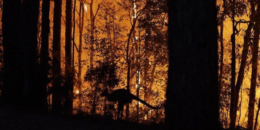 Avustralya'da 'Mega Yangın' Endişesi