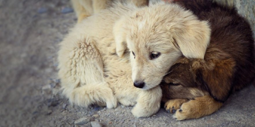 Kars'ta Sokak Hayvanları Kısırlaştırılıyor