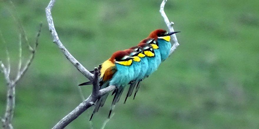 Canlanan Doğa Kuşlarla Şenlendi