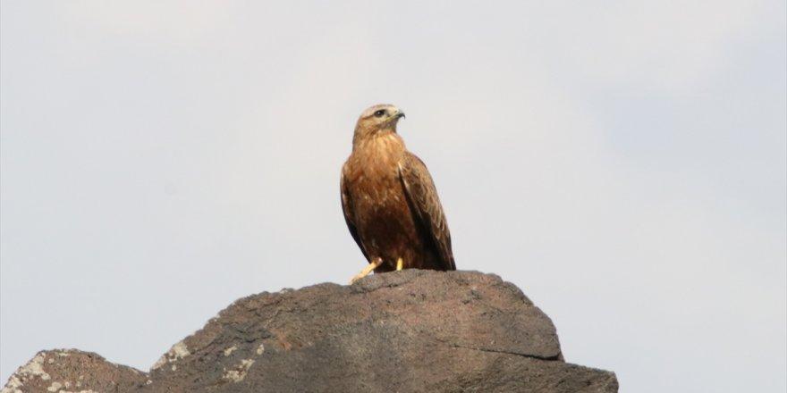 Iğdır'da 276 Kuş Türü Yaşıyor