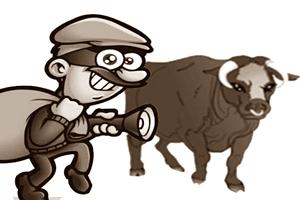 Kars'ta Hayvan Hırsızları Kol Geziyor!