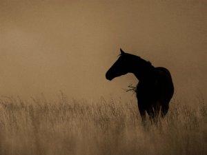 At Üzerindeki Kadınlar, Erkeklere Taş Çıkarttı
