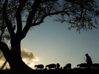 Kayıp Çoban Ölü Bulundu