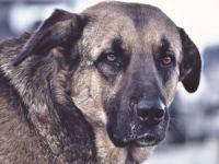 Polis 'Sokak Köpekleri'ni Doyurdu