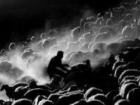 8. Tarım ve İnsan Fotoğraf Yarışması Başlıyor