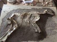 2700 Yıllık Köpek İskeleti Sergilenecek