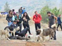 'Gönüllüler'den Hayvan Barınağı Ziyareti