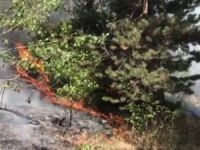 Orman Yangını 7 Gün Sonra Söndürüldü